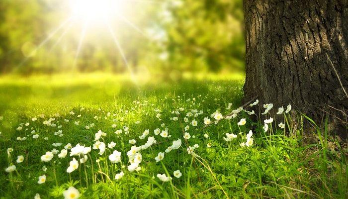 Pismeni sastav o proleću